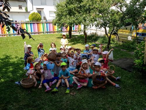 Češnjev piknik